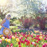 Créer un jardin : conseils de conception pour les débutants