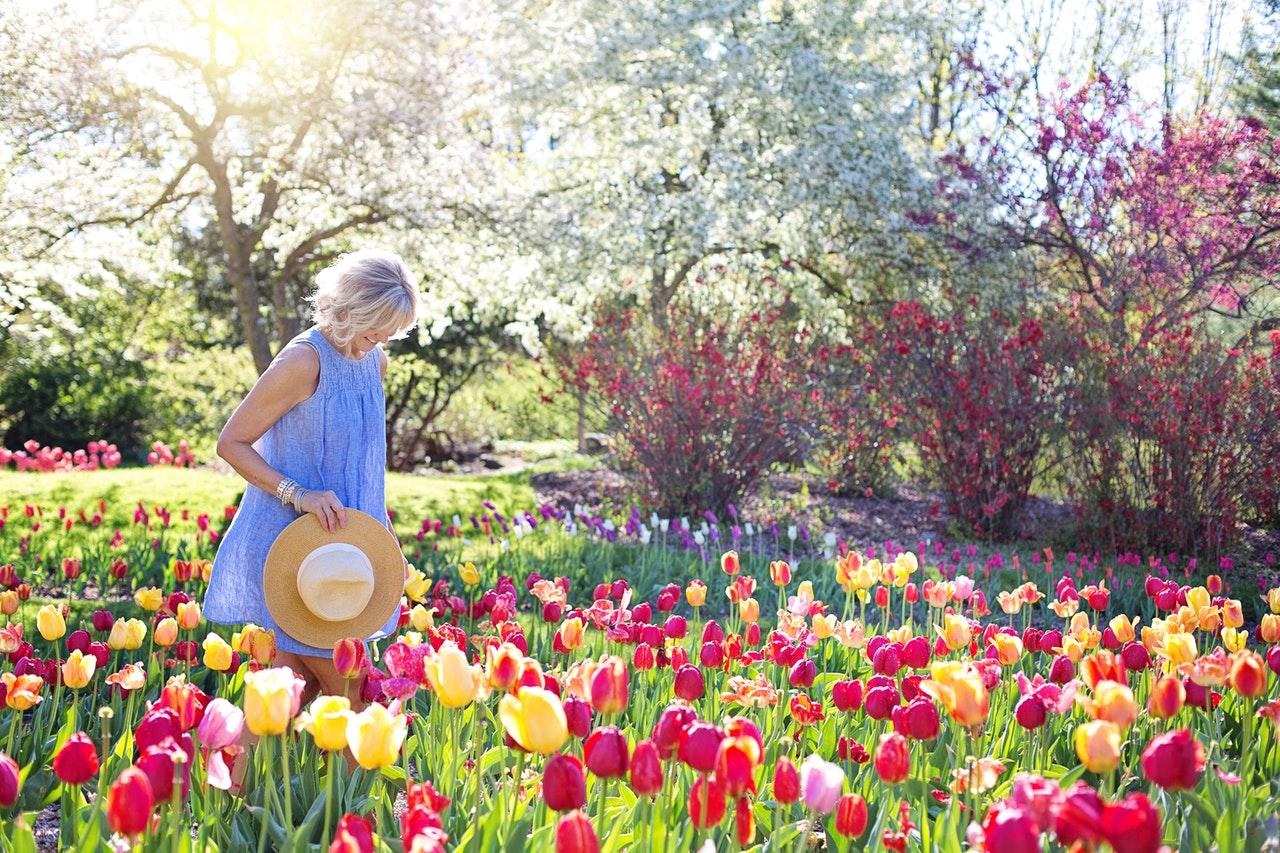 jardin avec des fleurs